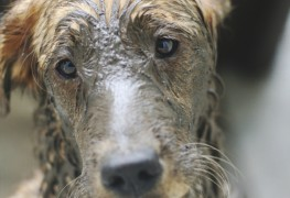 Tips on fixing a smelly dog
