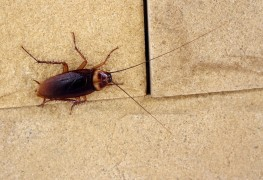A close look at what causes insect infestation