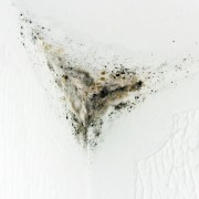 What are the most common types of mould?