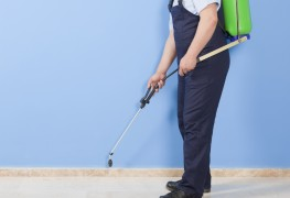 Things to consider when choosing an exterminator