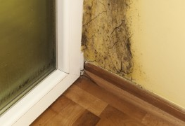 How to detect mould in walls
