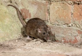 What are the different types of pest control products?