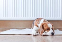 Keep allergens away with hypoallergenic flooring