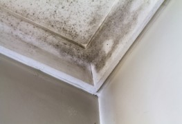 Prevent mould from growing in your home