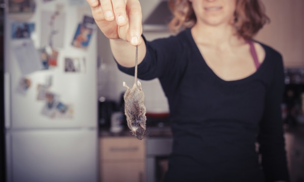 Rats and ants: do you know about the most common household pests?