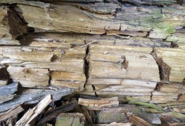 Simple tips for treating Dry Rot in your home