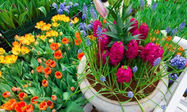 How to create a lush indoor garden