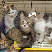Homemade cat cleanliness products: litter boxes, flea and tick removal