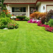 How to maintain your lawn year-round