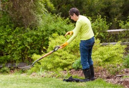 2 quick fixes for your lawn