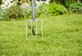 Tips for taking care of grass