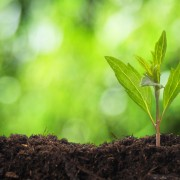 6 ways to get your yard ready to plant: start with soil and mulch