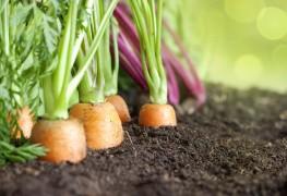 Backyard organic vegetable gardening tips