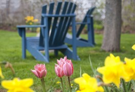 How to create a beautiful outdoor space
