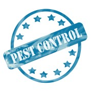 Effective DIY pest control methods