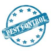 Effective DIY pest control methods