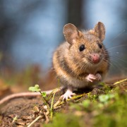 When do you need pest control?