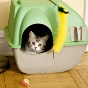 What to look for when buying pet accessories