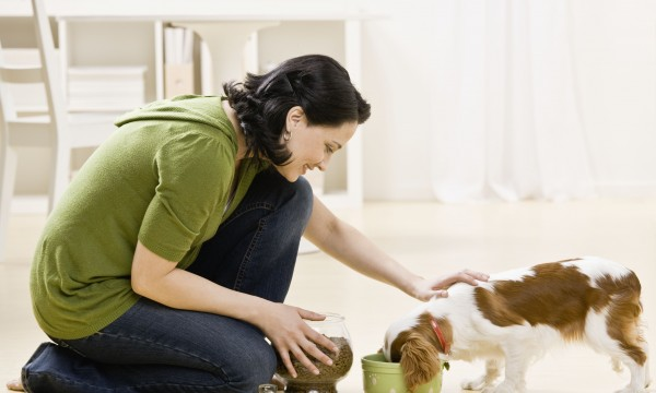 Choosing the right pet health supplements