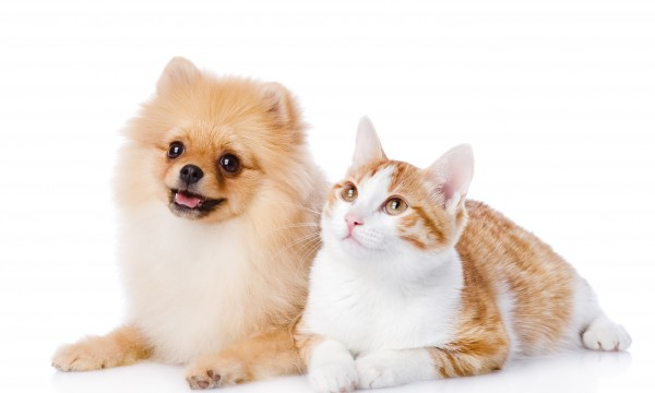 Tips to keep your pet free of worms, ticks and viruses