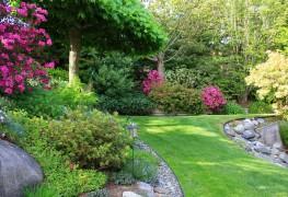 How to create a native plant garden