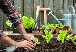 Simple steps to care for seedlings outdoors