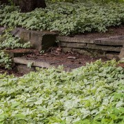9 pointers for caring for ground covers