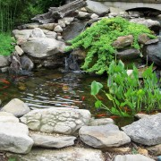Simple steps for cleaning a fish pond