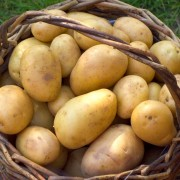 All you need to know about cooking and storing potatoes
