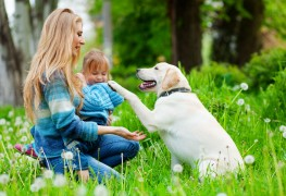 10 ways to keep your pets (and your home) tick-free