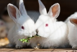 Homemade food for pet gerbils, rabbits and rodents