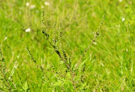 Your guide to killing broadleaf weeds
