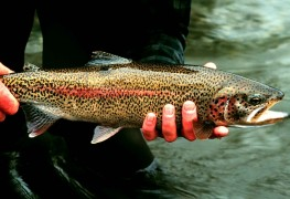 5 tips for catching rainbow trout