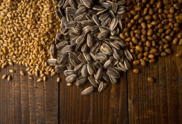 Sowing good health with the power of seeds