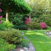 3 steps for easy care shrubs