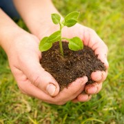 Your guide to caring for garden soil