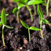 Tips for improving your garden's soil