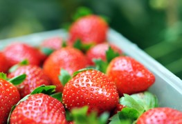 How to start your own strawberry patch