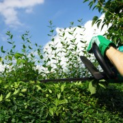10 things to know before you start pruning trees and shrubs