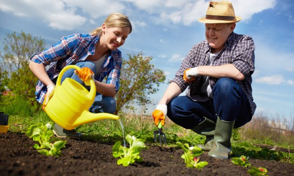 Tips for planting your garden