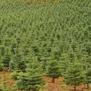 Helpful advice on starting a tree farm