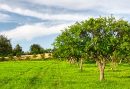 Tips for transplanting trees and shrubs in your garden