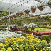5 easy ideas for buying the best plants