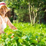 Your guide to maintaining bountiful vegetable beds