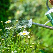 Rainwater collecting tips and tricks to keep plants lush