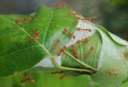 10 ways to deal with ants in the garden
