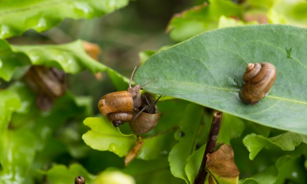 9 ways to eliminate slugs and snails from your garden | Smart Tips