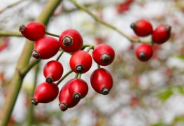 5 methods of finding and picking wild berries