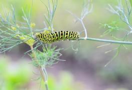 10 conseils de base pour combattre les insectes dans votre jardin