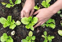8 fleurs et légumes à planter ce printemps